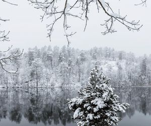 beautiful, snowy, and frozen image
