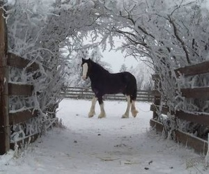 animal, cold, and nature image