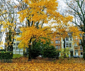 autumn, inlove, and ❤ image