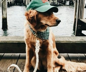 puppy, dog, and hat image