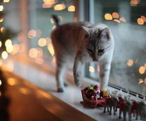 cat, christmas, and decoration image