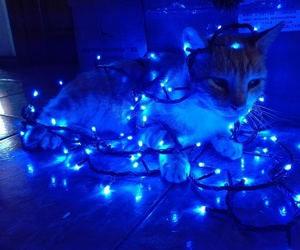 blue, cat, and christmas image