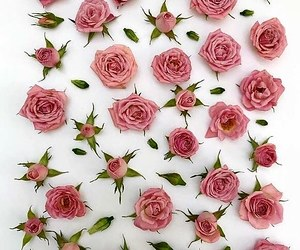 creative photography, flowers, and pink image