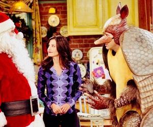 armadillo, chandler, and christmas image