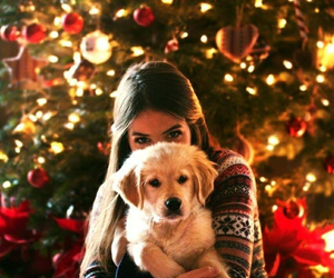 christmas, dog, and girl image