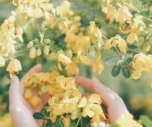 beautiful, yellow, and flower image