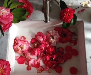 pink, red, and roses image