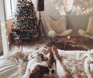 christmas, dog, and Christmas time image