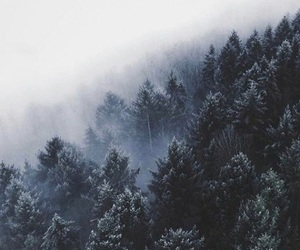 winter and forest image