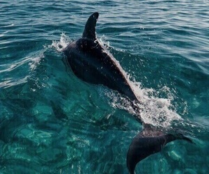 dolphin, summer, and ocean image