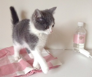 pink, aesthetic, and cat image