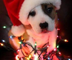christmas, dog, and holidays image