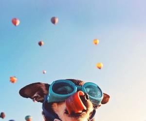 background, dog, and iphone image