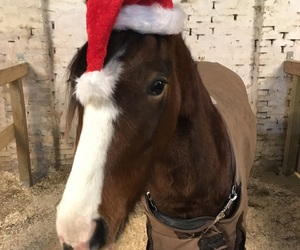 christmas, horse, and welshcob image
