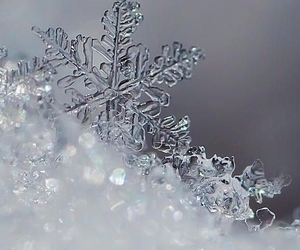 december, snowflake, and winter image