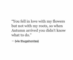 quotes, flowers, and autumn image