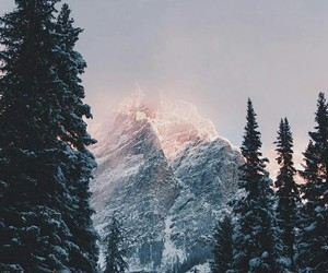 winter, tree, and mountains image