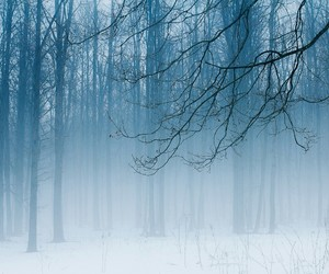snow, fog, and forest image