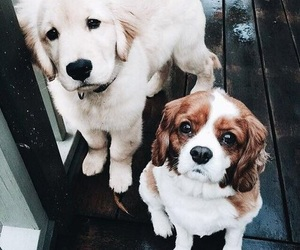 adorable, dogs, and cute image