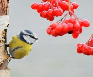 animal, berries, and garden image
