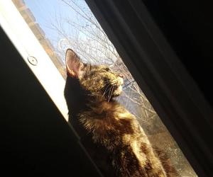 blue skies, cat, and caturday image