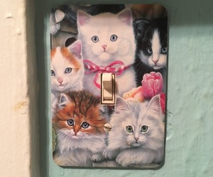 cat, light switch, and cats image