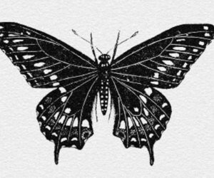aesthetic, butterfly, and drawing image