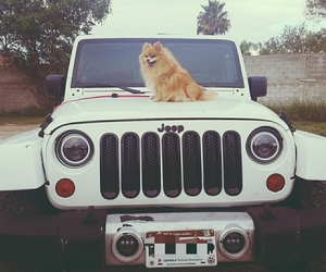 dog, girly, and jeep image