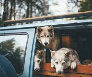dog, animal, and car image