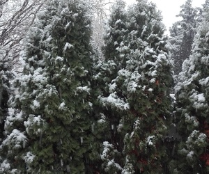 snow, winter, and ahw image