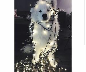 beautiful, dog, and lights image