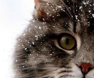 cat, snow, and animal image