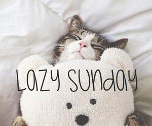 cat, Sunday, and Lazy image