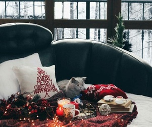 winter, cat, and christmas image
