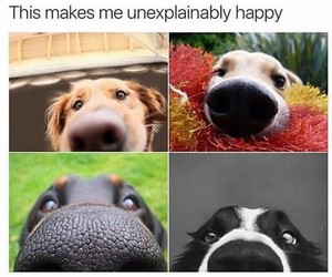 dog, cute, and happy image