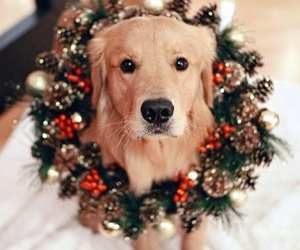 christmas, dog, and animal image