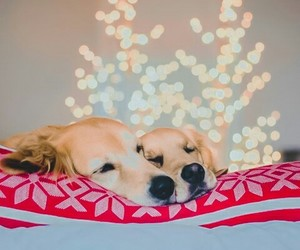 christmas, puppies, and love image
