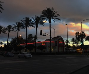 palms, aesthetic, and sky image