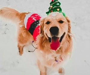 animals, beauty, and christmas image