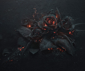ashes, burning, and roses image