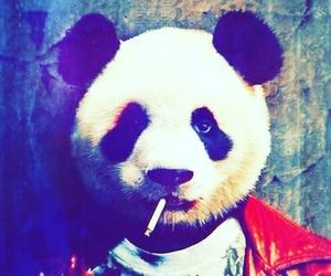 panda, smoke, and smoking image