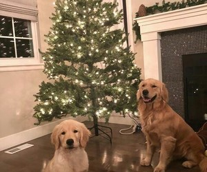 animals, christmas, and cozy image
