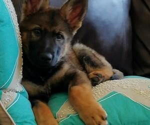 black, cut, and dog image