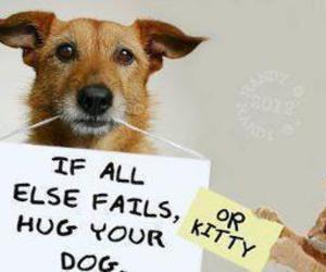 dog, cat, and hug image