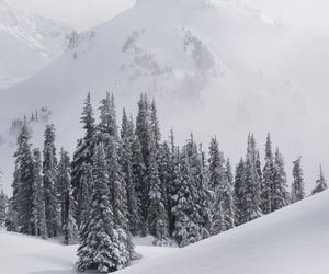 forest, snow, and season image