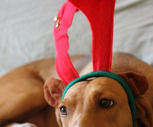 brown, christmas, and pretty image