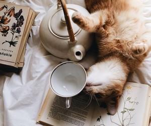 autumn, cat, and tea image