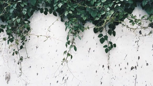 plants, white, and alternative image