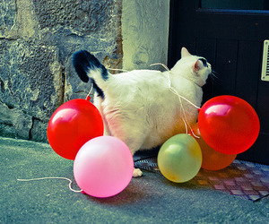 cat, balloons, and party image