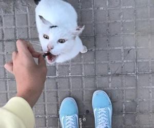 cat, animal, and baby blue image